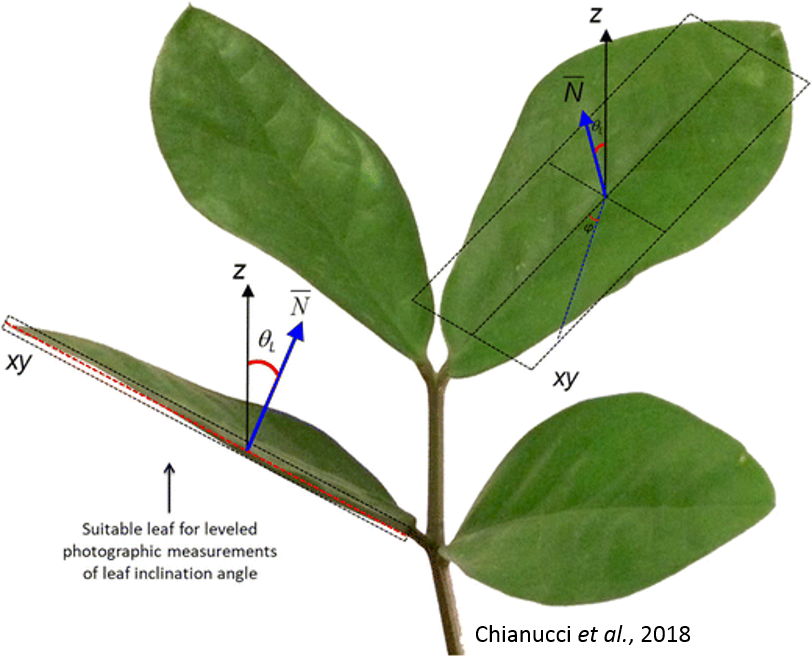 A dataset of leaf inclination angles for temperate and boreal