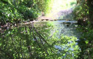 Cultiver de l'eau propre